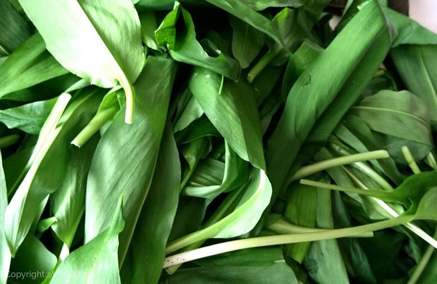 VINUM-Wild-Garlic