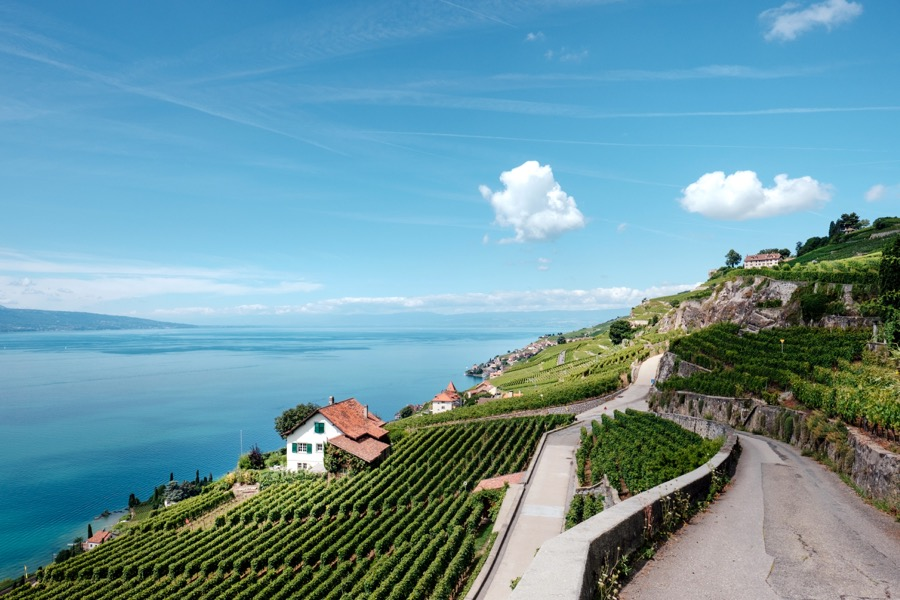 VINUM vineyard-in-Switzerland