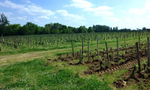 VINUM-Bordeaux-vineyard