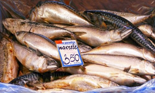 mackerel-in-market
