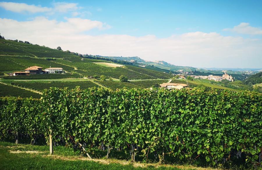 piemonte-vineyard